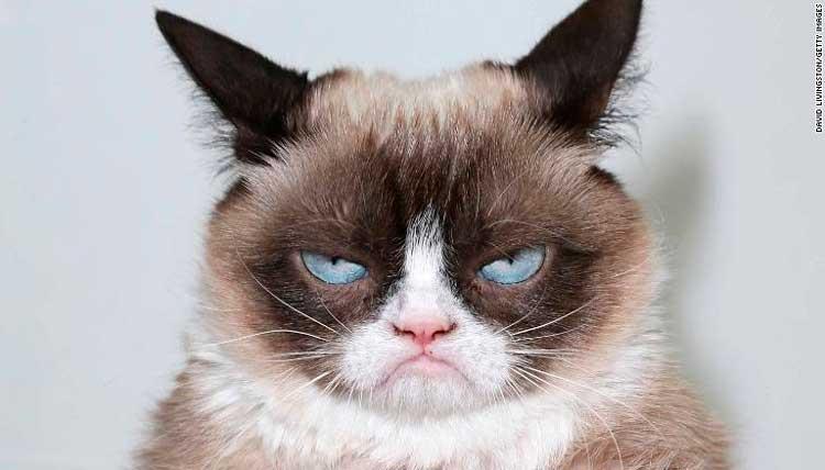 Grumpy-Cat-meme